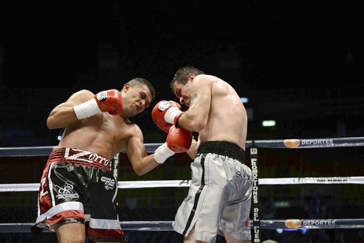 Boxeador enjambre